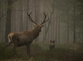 Afbeelding behorende bij Wild